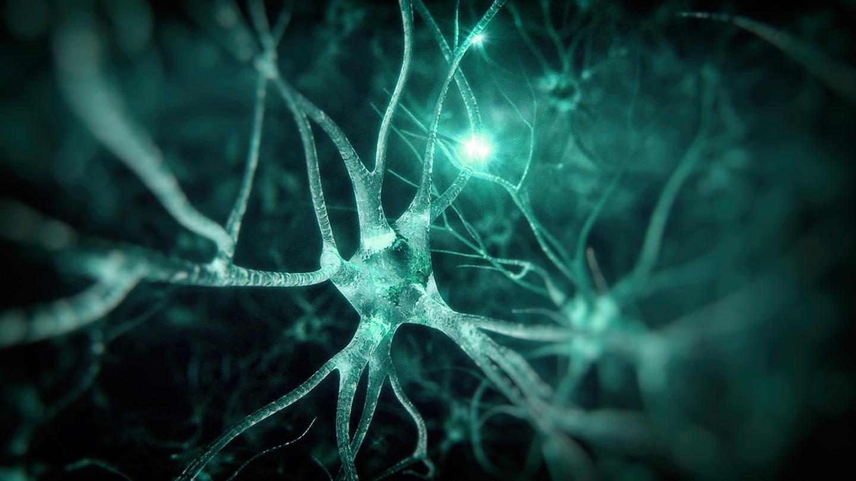Cerebralna paraliza na mreži